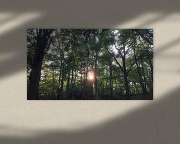 MORNING SUN TREES AND LEAVES van Ivanovic Arndts