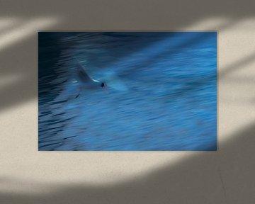 Meeuw in blauw. van Cor Pot