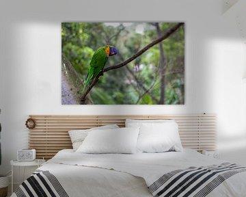 Katandra Treetops Papegaai van Richard Steenvoorden