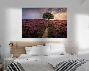 de paarse heuvel van Mario Visser