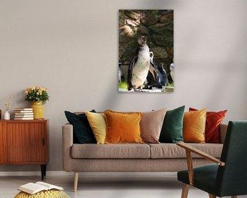 Pinguin von Klaus-Dieter Schulze