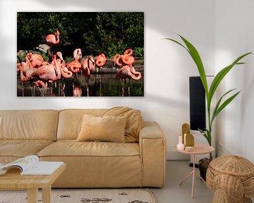 Flamingos von Klaus-Dieter Schulze