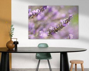 Lavendelfeld von Jana Behr