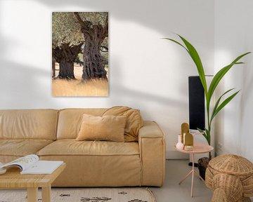 Olive trees van Jana Behr
