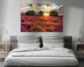 Posbank - Purple Sunset von Joram Janssen