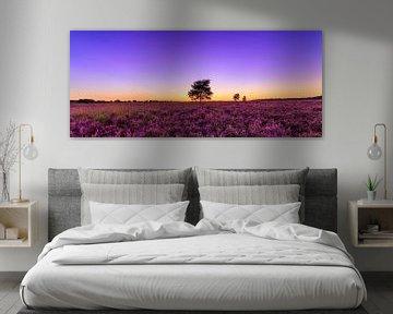 Purple Sunset - Ginkelse Heide von Joram Janssen