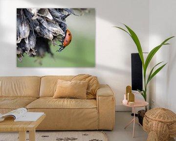 Lieveheersbeestje op uitgebloeide bloem. Collage drieluik #3 sur Gonnie van Hove