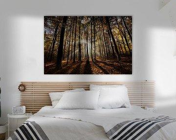 Herfstzon in het bos