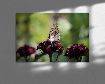 Vlinder van Nikki Ickx