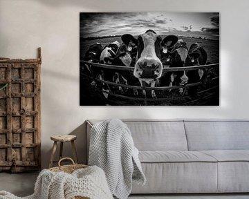 Holländische Kühe von John Monster