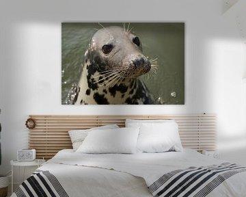 Portret van een nieuwsgierige zeehond! van André Hamerpagt