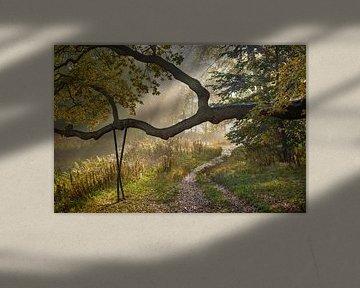 Bospad in de herfst van Michel van Kooten