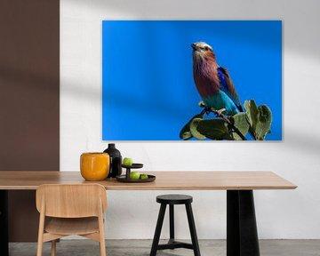 Colored bird on branch tree Botswana van P Design