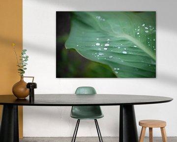 Waterdruppels op een blad van Edwin Teuben
