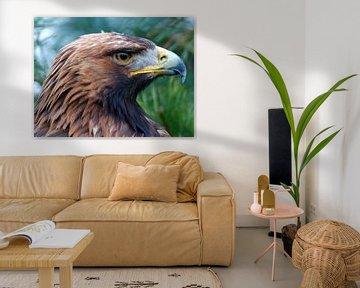 Vogel van Gonnie van Hove