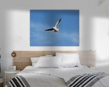 vrij als een vogel / free as a bird von Pascal Engelbarts