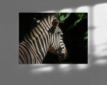 Zebra in de zon  von Sandra de Moree