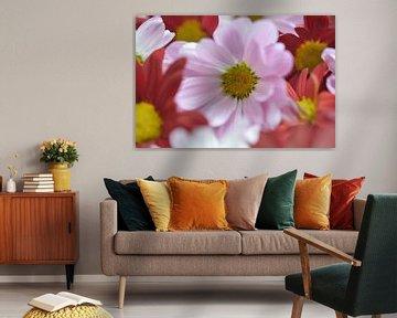 Blütenleuchten von zwergl 0611