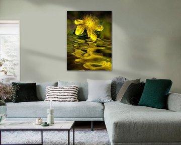 Wasserblüte - Johanniskraut von Christine Nöhmeier
