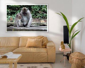 monkey business van Edwin van Unen
