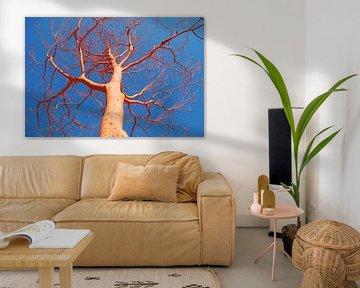Oranjeboom. van Fred Fiets