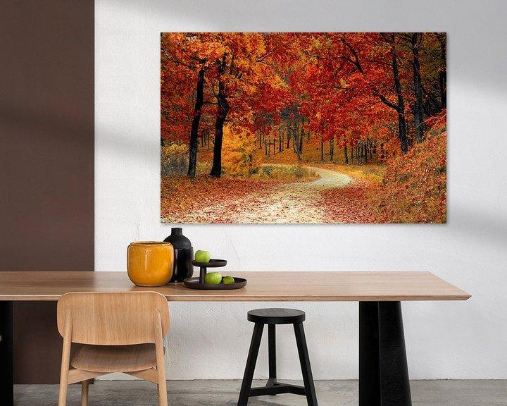 Impression: Herbst im Wald (Bäume, Blätter und Wald) sur Roger VDB
