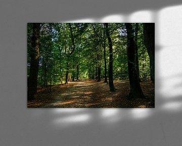 Wandelpad in het bos van Stedom Fotografie