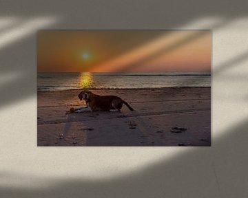 Hond met speeltje op het strand von Richard Steenvoorden
