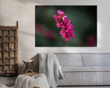 Paarse bloem von Stedom Fotografie