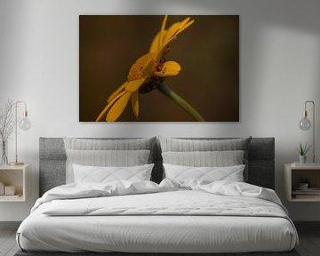 De gele bloem van Stedom Fotografie