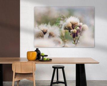 white & fluffy van Ake van der Velden