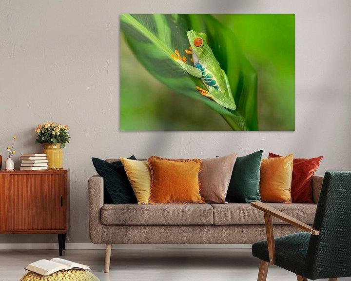 Beispiel: Red-eyed tree frog on a leaf von Tim Verlinden
