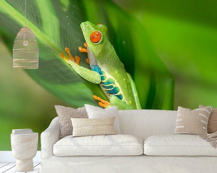 Beispiel fototapete: Red-eyed tree frog on a leaf von Tim Verlinden