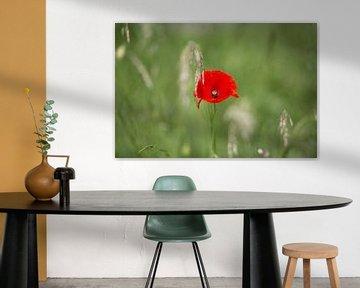 Rode klaproos in groen veld sur Sylka Mannaert