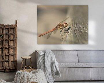 La Belle Libelle van Suzan (Suus) Buskes