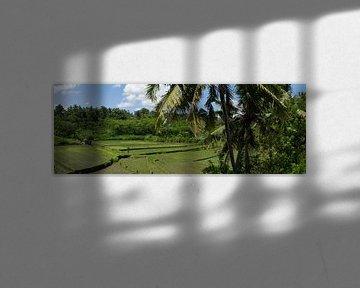 Rijst panorama van Leanne lovink