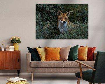 HIDDEN FOX van Peter Dane