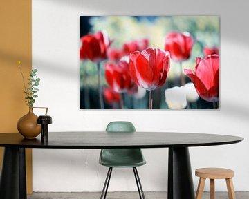 rote Tulpen von Jessica Berendsen