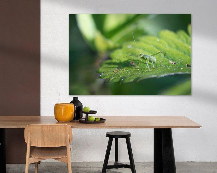 Sfeerimpressie: Kleine groene sabelsprinkhaan van Yorrit v.d.Kaa