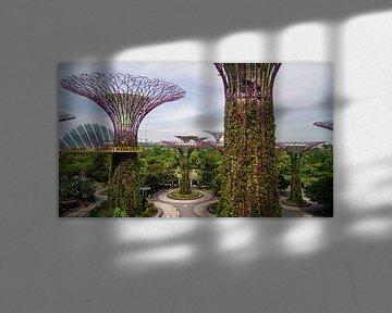 Supertree Grove - Singapore van Raymond Gerritsen