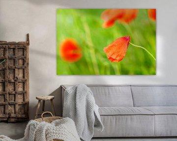 Poppy von Fernand Reiter