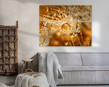 Golden Hour (Paardenbloempluis met gouden druppel) van Caroline Lichthart