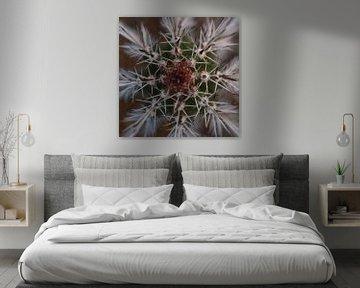 cactus mandala von Fraukje Vonk