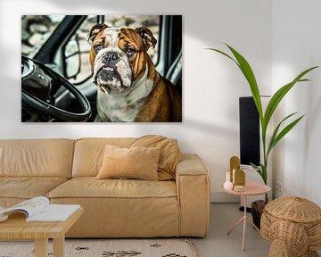 Portret van een Bulldog van Harrie Muis