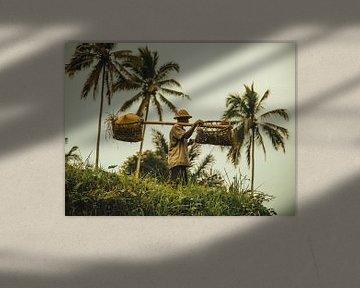 Een rijstverbouwer aan het werk van Fabian Bosman