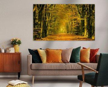 Herfst in een Beukenbos op de Veluwe van Sjoerd van der Wal