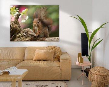 Eekhoorn in de bloesem