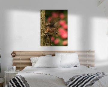 Eekhoorn met bloemen achtergrond