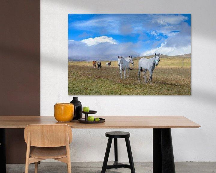 Sfeerimpressie: Cotopaxi paarden van Peter Vruggink