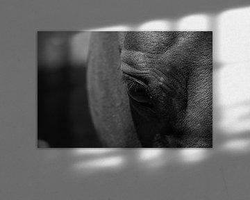 Paard in zwart-wit van Sharleen Roijackers